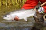 Jared Nelson- Kvichak Anglers Igiugig, AK 99613 # 907-533-3299 www.alaskakvichakanglers.com